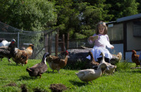 Hidden Valley Pet Farm