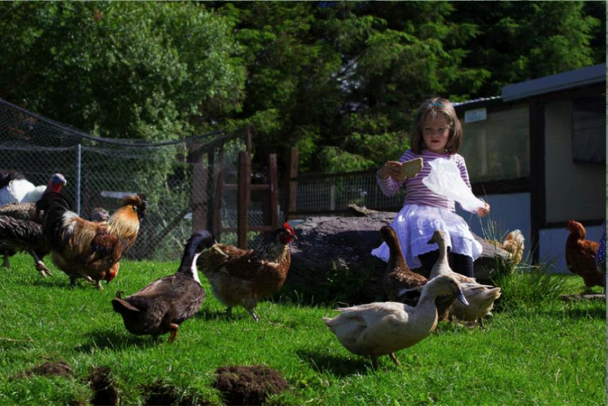 hidden-valley-pet-farm